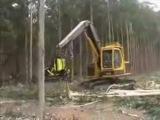 Как японцы валят лес